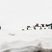 Tourists camp on the ice and snow at Hughes Bay on the Antarctic Peninsula. In the foreground, close to the water, a group of Gentoo penguins also rest on the ice.