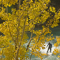 A river surfer rides a wave in the Kananaskis River near Calgary.