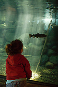 Young girl looking at fish underwater at the Taylor Creek Stream Chamber, El Dorado National Forest, California