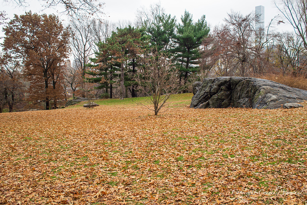 Cherry Hill in Central Park