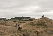 Theodore Roosevelt National Park lies in western North Dakota, where the Great Plains meet the rugged Badlands. It's great habitat for bison, elk and prairie dogs. The Little Missouri River flows through the park. It's also the home to wild horses.