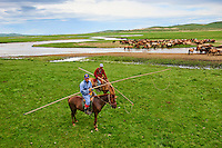 Mongolie, Province de Ovorkhangai, Vallee de l'Orkhon, campement nomade, Uuganbayar rassemble ses chevaux // Mongolia, Ovorkhangai province, Orkhon valley, Nomad camp, Rallying of horses drove with Uuganbayar