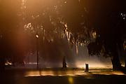 Morning fog in historic Forsyth Park in Savannah, Georgia, USA.