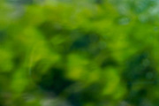 Abstract green blurry background of plants in a garden