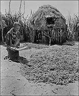 Karamajong women in a taditional tribal compound thrashing sorgum grain- Karamajong Uganda 1980
