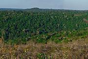 Canaa dos Carajas_PA, Brasil.<br /> <br /> Floresta Nacional de Carajas em Canaa dos Carajas, Para.<br /> <br /> Carajas National Forest in Canaa dos Carajas, Para.<br /> <br /> Foto: JOAO MARCOS ROSA / NITRO