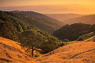 Sunset light over oak trees and hills above Otis Canyon, from Palassou Ridge, Santa Clara County, California