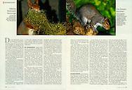 Publication: STERN (Germany), Nr.14, 26.03.2009, Photography by Heidi & Hans-Jürgen Koch/animal-affairs.com