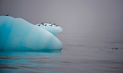 Iceberg with Arctic Terns (Sterna paradisaea) at 81 degrees north, off Spitsbergen, Svalbard.