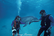 cinematographers Howard and Michele Hall with Honey, a wild sociable bottlenose dolphin, or ambassador dolphin, Lighthouse Reef Atoll, Belize, Central America ( Caribbean Sea )