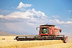 Grain Harvest, Ririe, Idaho,