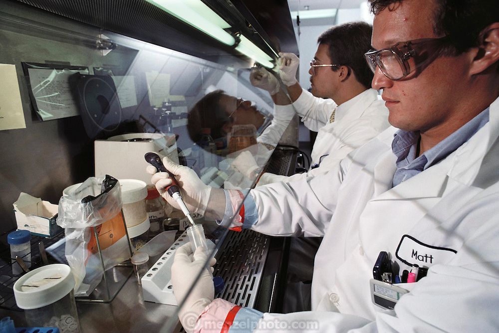 (1992) Matt McCoy (front) and Mark Bodee extract DNA from fetal tissues and blood and semen stains at Cellmark Diagnostics in Germantown, Maryland. ). DNA consists of two sugar- phosphate backbones, arranged in a double helix, linked by nucleotide bases. There are 4 types of base; adenine (A), cytosine (C), guanine (G) and thymine (T). Sequences of these bases make up genes, which encode an organism's genetic information. DNA Fingerprinting. MODEL RELEASED.
