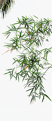 Bamboo vert #4
