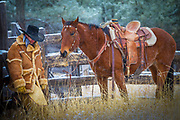Cowboy and horse at ranch in Wyoming's Black Hills