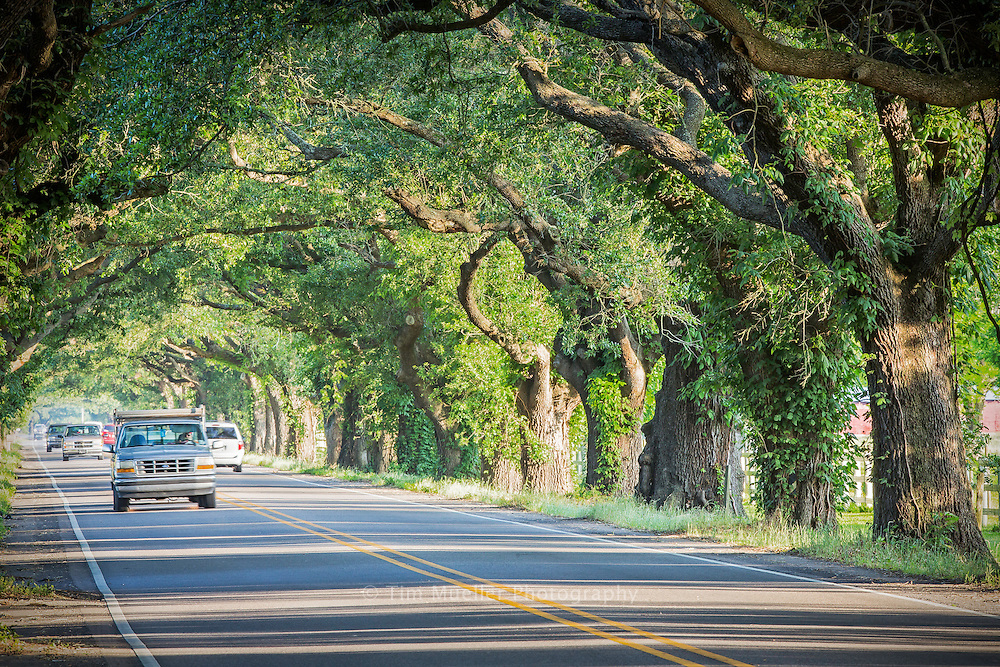 The Docville Oaks at Docville Farm frame the San Bernardo Byway along the St. Bernard Highway between Chalmette and Violet, La. The Byway is on the outskirts of New Orleans and it follows the Mississippi River through the communities of St. Bernard Parish.