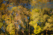 Autumn trees reflecting in river design