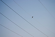 A small bird stands perched on an electrical wire in Livermore, California.