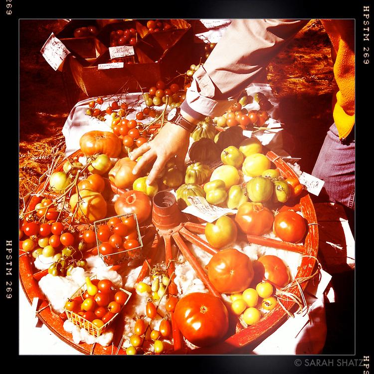 Jaqui's tomatoes