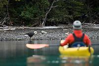 Young woman watching bald eagles along Chilko Lake shoreline while kayaking. British Columbia, Canada