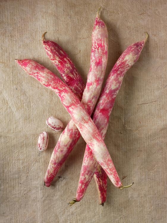 Fresh picked borlotti beans  also known as the cranberry bean or Roman bean