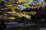 A sunny autumn afternoon in the Englischer Garten, Munich