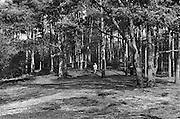 Nederland, Nijmegen, 20-8-1975Een vrouw zit op een bankje in het bos, de Hatertse vennen, te genieten van het mooie weer en de rust.Foto: Flip Franssen/Hollandse Hoogte
