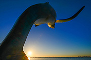 Whale breaching sculpture along the Malecon, eveing light, February, La Paz, Baja, Mexico