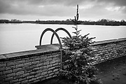 St Amands, Belgium, 15 dec 2017, undecorated christmas tree along the river scheldt (each year more +/- 35 million real pine trees are being sold worldwide and function as a christmas tree for 1 month)