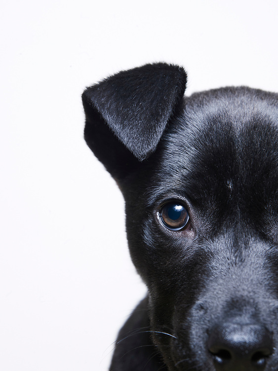 Mixed breed puppy looking into camera