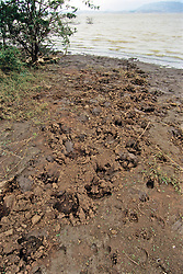 Footprints Along River, Great Zimbabwe Safari