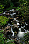 A secluded rainforest stream gently flows over well weathered rocks, as ferns and shrubs encroach upon its banks to be within reach of its cool, refreshing waters.