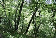 Georgia, Borjomi forest