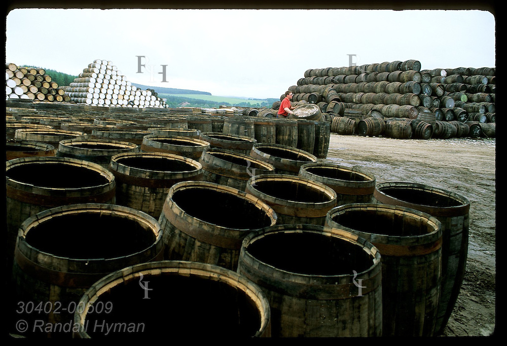 Cooper rolls old cask from yard @ Speyside Cooperage to repair it for whisky industry; Dufftown. Scotland