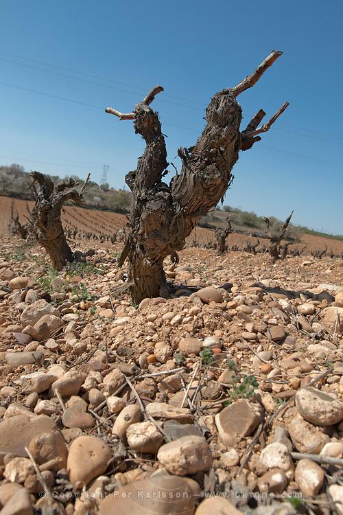 tempranillo old vine gobelet training gravelly soil bodegas frutos villar , cigales spain castile and leon