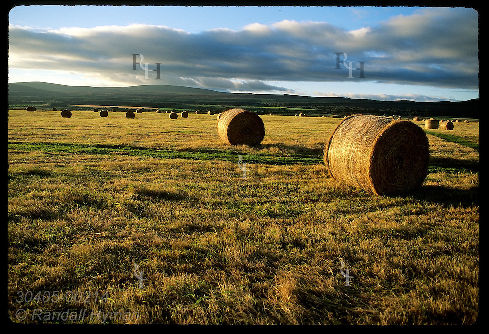 Hay bales cast long sunrise shadows in Field of the English where royal troops were buried after Culloden battle; Scotland.