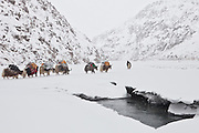 Passing a hole in the icy river, walking on ice,  a Kyrgyz caravan on its way to the lower valley. .Between Zardibar and Sarhad village, end of expedition...Trekking back down from the Little Pamir, with yak caravan, over the frozen Wakhan river.