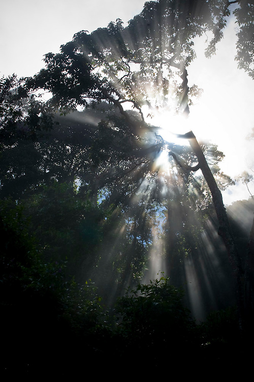 Alto Caparao_MG, Brasil...Raios do sol em uma paisagem na estrada para Cachoeira Bonita no Parque Nacional do Caparao...The sun rays in the landscape in a road for Bonita waterfall in the Caparao National Park...Foto: BRUNO MAGALHAES / NITRO