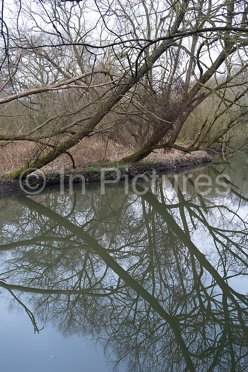 Trees refelcted in water on the River Brent on 25th January 2020 in London, United Kingdom. This area is an offshoot of the Grand Union Canal and provides an very healthy habitat for many species of birds.