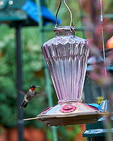 Ruby-throated Hummingbird and Hummingbird Feeder. Image taken with a Nikon D850 camera and 70-300 mm VR lens.