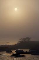 Landscape in sea fog.<br /> Kallskär, Stockholm Archipelago, Sweden