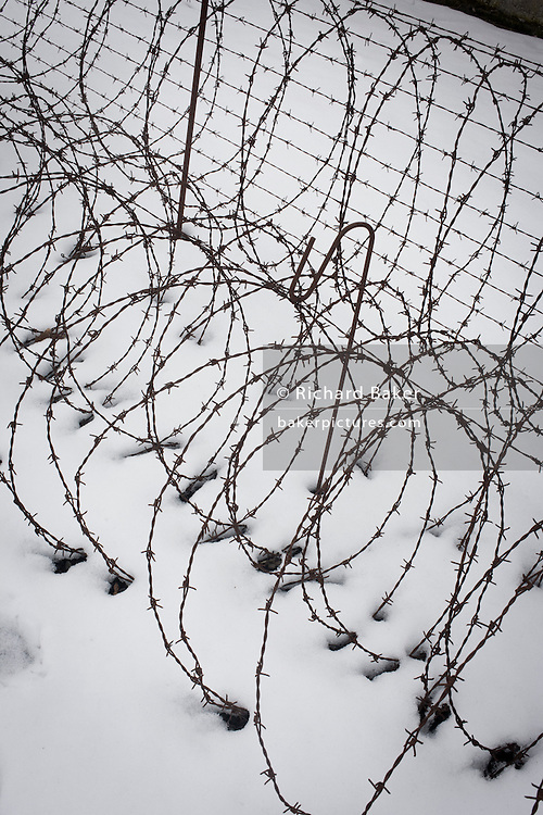 Coils of rusting barbed wire in winter snow form a perimeter fence in the Nazi and Soviet Sachsenhausen concentration camp, now known as the Sachsenhausen Memorial and Museum. Sachsenhausen was a Nazi concentration camp in Oranienburg, 35 kilometres (22 miles) north of Berlin, Germany, used primarily for political prisoners from 1936 to the end of the Third Reich in May 1945. After World War II, when Oranienburg was in the Soviet Occupation Zone, the structure was used as an NKVD special camp until 1950. Executions took place at Sachsenhausen, especially of Soviet prisoners of war. 30,000 inmates died there from exhaustion, disease, malnutrition, pneumonia, etc. The remaining buildings and grounds are now open to the public as a museum.