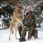 Mongolian wolf Heiko licks the face of German wolf researcher Werner Freund, 79, in a sign of acknowledgement at the wolves park in Merzig in the German province of Saarland January 24, 2013. Freund established a home for wolves in 1972 and raised more than 70 animals in the last 30 years. Freund had to become a wolf among wolves to be accepted by the pack. Picture taken January 24, 2013.  REUTERS/Lisi Niesner  (GERMANY)