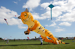 © Licensed to London News Pictures. 31/08/2013. Bristol, UK.  The Bristol International Kite Festival at Ashton Court Estate.  Guest flyers from across the world have flown in specially to create a  spectacle of both special shaped kites, and team displays. 31 August 2013.<br /> Photo credit : Simon Chapman/LNP
