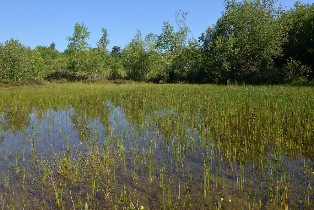 Classic heathland pool, perfect for breeding dragonflies, Decoy Heath, Hampshire