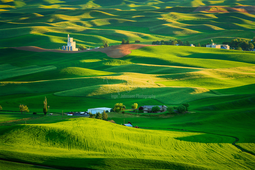 Farm fields from Steptoe Butte in the Palouse region of eastern Washington state