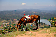 Horse grazing at the peak of Nui Langbiang (Langbiang Mountain), with views over the Da Lat region. Da Lat, Vietnam