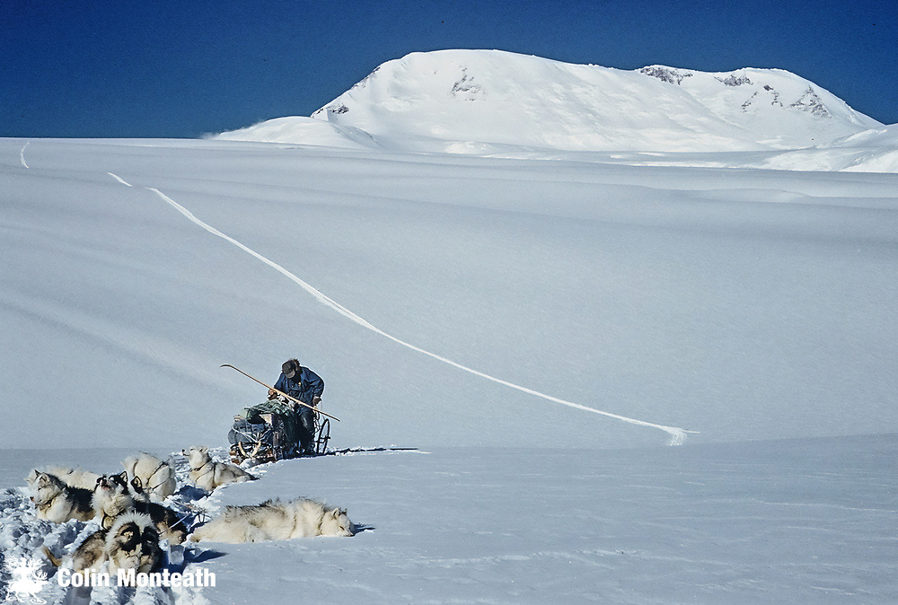 Half way down, Kiwi dogs rest during descent of Axel Heiberg Glacier - about to enter  the Axel Heiberg Icefall January 1962