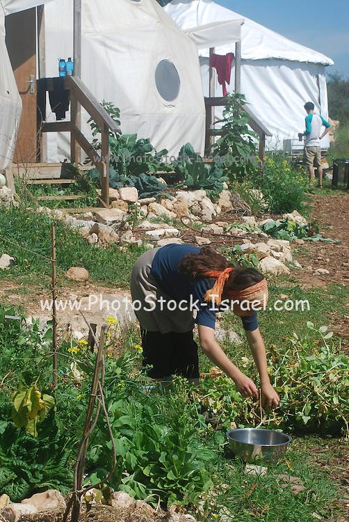 Israel, Ecological farm, Organic farming