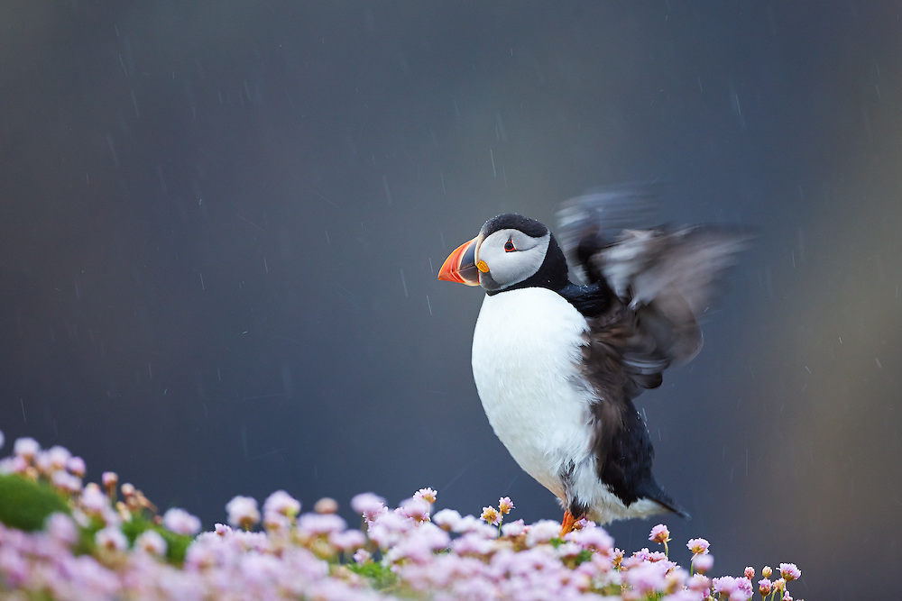 Fair Isle, Shetlands