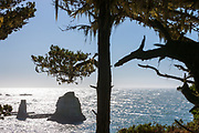 Sun glints off the Pacific. Point Arena-Stornetta Public lands